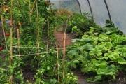 Organic food | Atlantic Villa